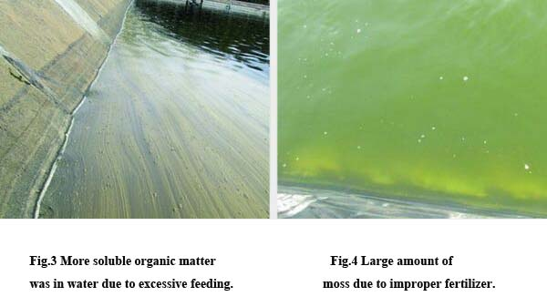 Water quality problems in Litopenaeus vannamei cultivation2