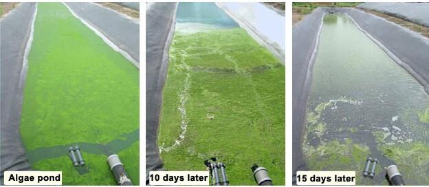 ultrasonic-algae-controller-installation-site2-1