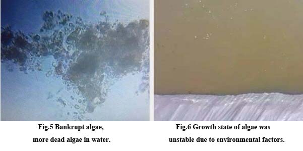Water quality problems in Litopenaeus vannamei cultivation3